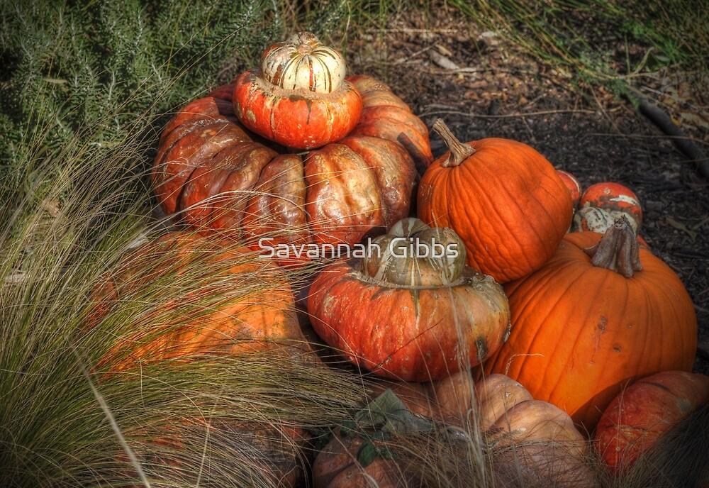 Pumpkins by Savannah Gibbs
