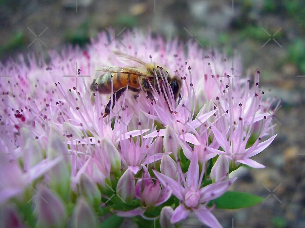 Honey Bee by FrankieCat