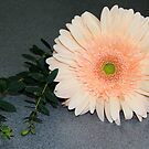 Single Gerbera by vbk70