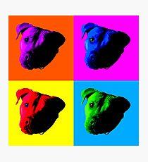 Pit Bulls Photographic Print