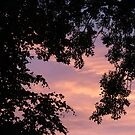 Trees at Sunrise by BlueMoonRose