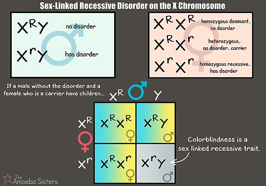 Sex-Linked Recessive Disorder on the X Chromosome by amoebasisters
