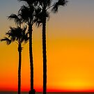Three Trees At Sunset  by Denise  Vasquez