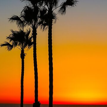 Three Trees At Sunset  by denisevasquez