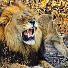 Black-Maned Lion and Cub by Kay Brewer