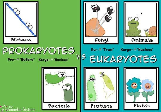 Eukaryotes vs Prokaryotes by amoebasisters