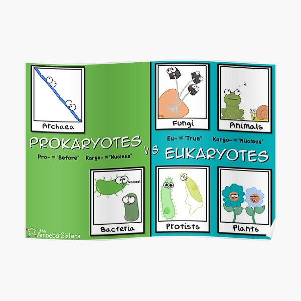 Eukaryotes vs Prokaryotes Poster