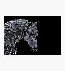 Portrait Of A Horse Fine Art Print Photographic Print