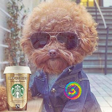 Dog in Jean Jacket Drinking Cappuccino by michaelroman
