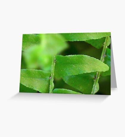 Gentle Fern Leaves Greeting Card