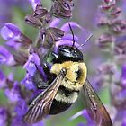 Bumble Bee by Sheryl Hopkins