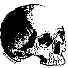 Skull Variations #3 by Dyson Logos