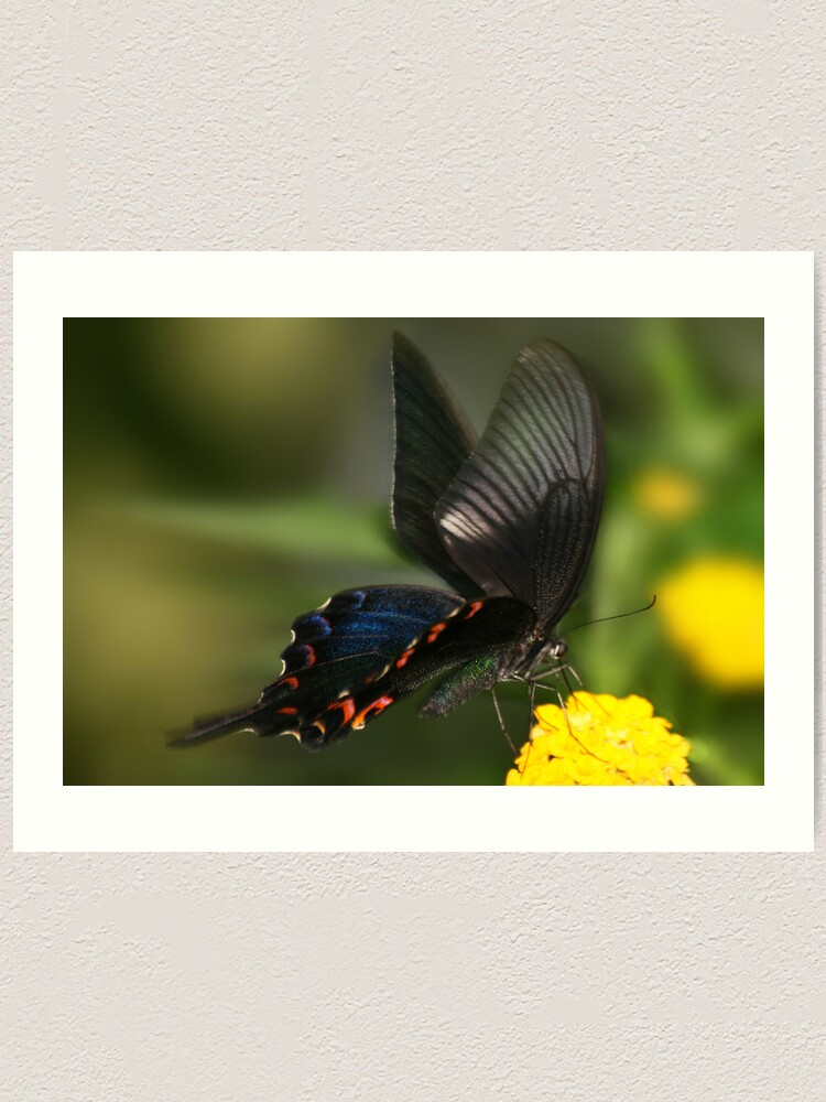 Alternate view of Eastern Tiger Swallowtail Butterfly Art Print