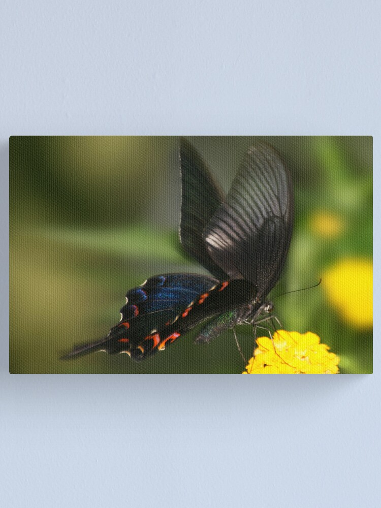 Alternate view of Eastern Tiger Swallowtail Butterfly Canvas Print