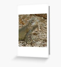 Iguana Bonaire Greeting Card
