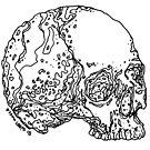 Skull Variations #4 by Dyson Logos