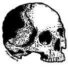 Skull Variations #5 by Dyson Logos