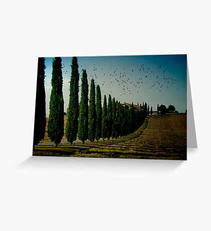 Cypress and Birds Greeting Card