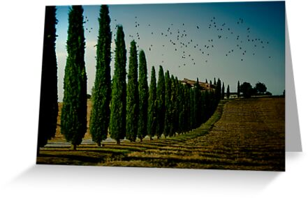 Cypress and Birds by Mary Ann Reilly