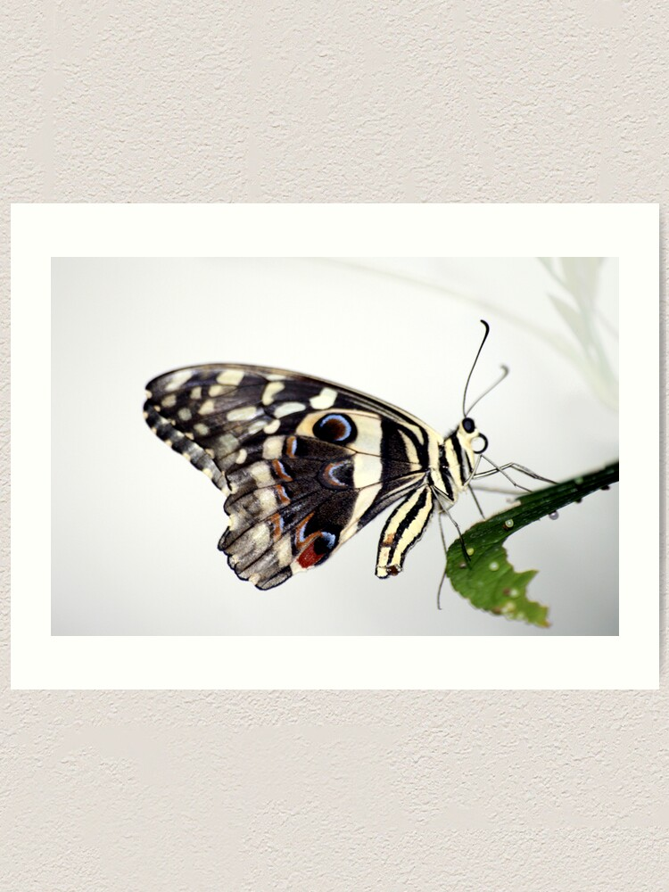 Alternate view of Lime Butterfly Art Print