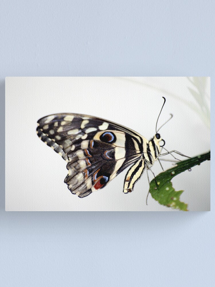 Alternate view of Lime Butterfly Canvas Print