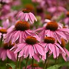 They call us Purple Coneflowers! Really?  by Poete100