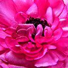 Spring Flowers by mrthink