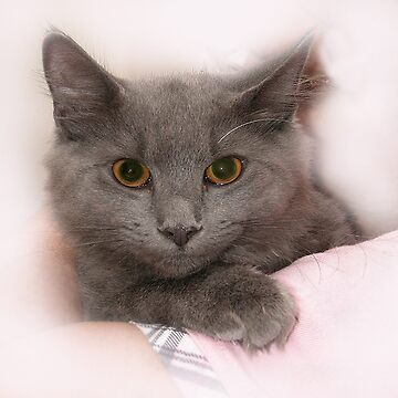 """""""Smokey"""" The Cat August 12 , 2009 by digiphotos"""