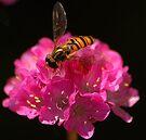 High Pollen. by Kerensa Davies