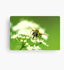 Insect Bee to Bee Canvas Print