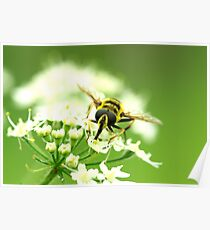Insect Bee to Bee Poster