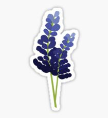 Bluebonnets  Sticker