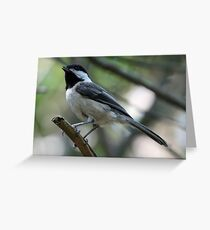 Black-Capped Chickadee With Open Beak Greeting Card