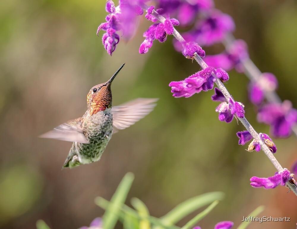 Hummingbird and Flowers by JeffreySchwartz