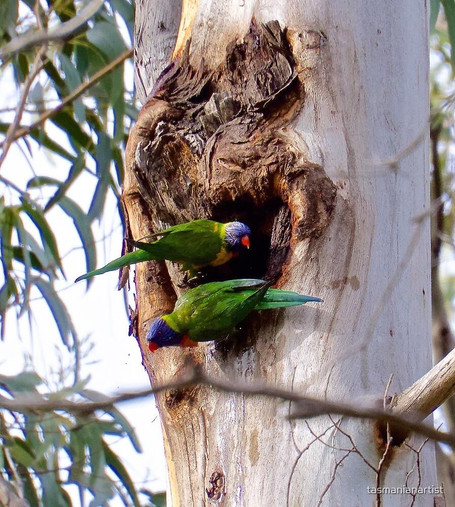 PARROT ~ Rainbow Lorikeet by David Irwin by tasmanianartist