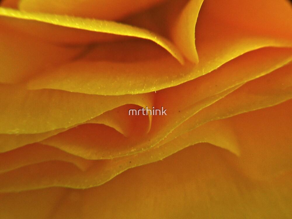 Flower's Loving Folds by mrthink