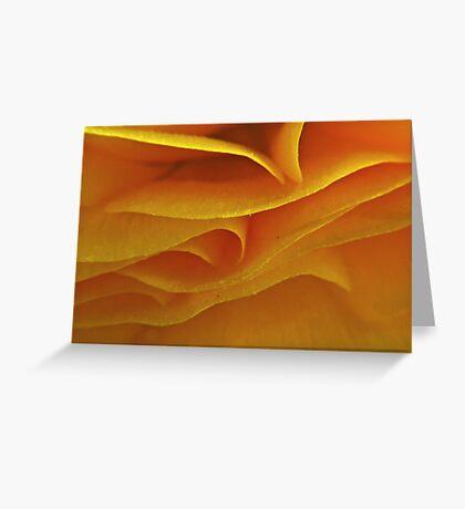 Flower's Loving Folds Greeting Card