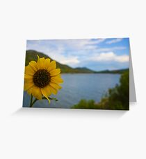 A sunflower that cant see the view Greeting Card