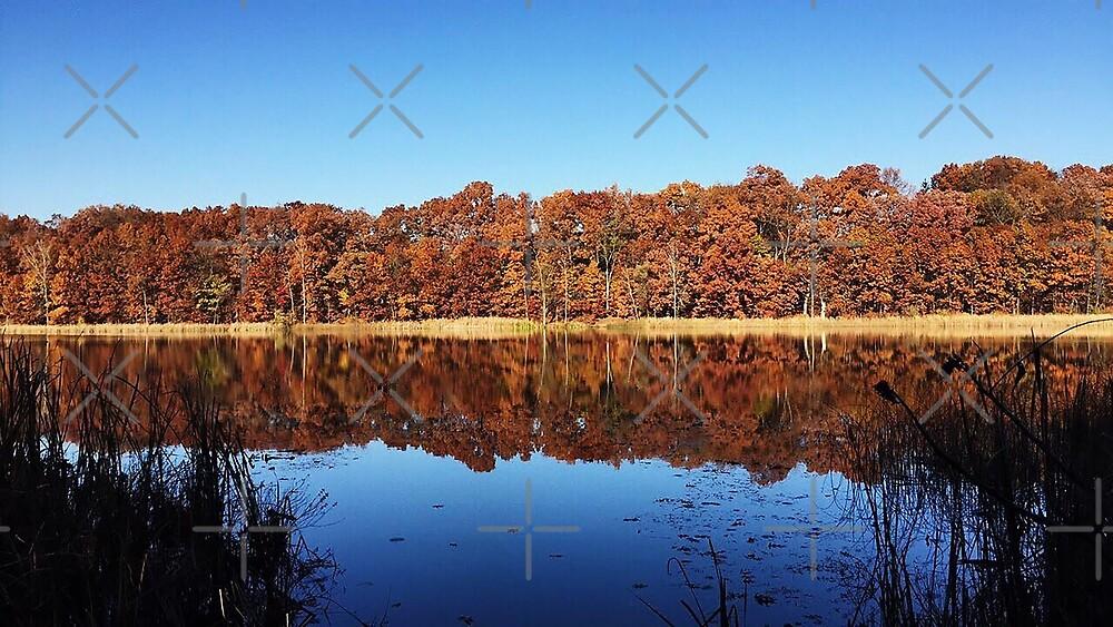Asylum Lake by Auna Zimmer