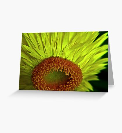 Straw Flower To Seed Greeting Card