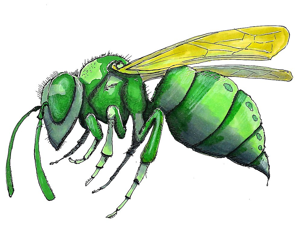 Green Wasp by frankpenny