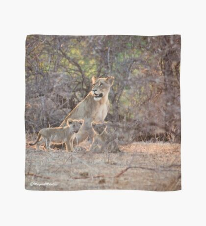 LAST LIGHT MOTHER AND CUBS - THE LION – Panthera leo Scarf