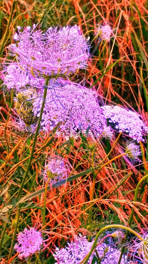 Blue Tinted Queen Annes Lace by OliviaHathaway