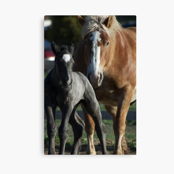 Molly Belle & Promise Canvas Print