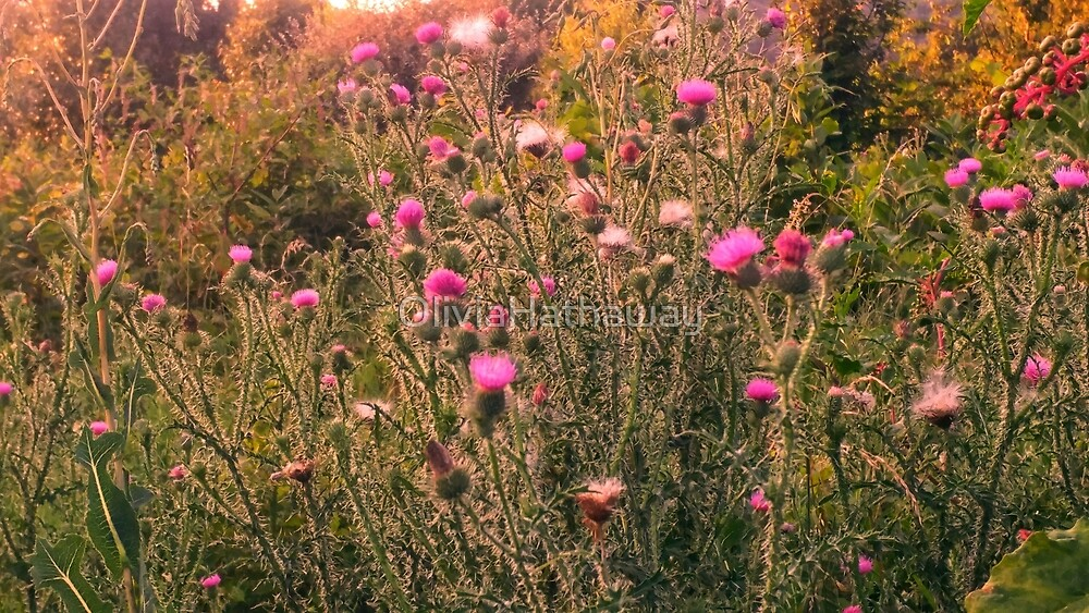 Thistle Field by OliviaHathaway