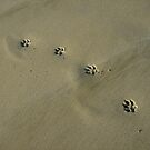 Pawprints in Maui by Carolyn Venditto