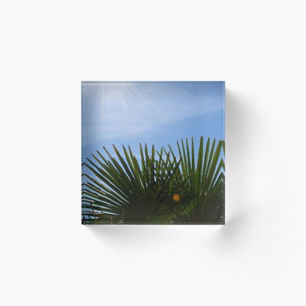 Palm Fans & Sun Rays Acrylic Block