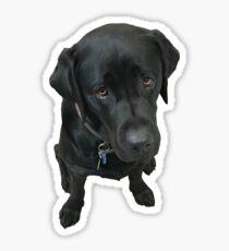 Black Labrador Sticker