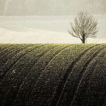 Rural Carpet by Donna-R