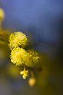 ~ as fresh as spring ~ by Adriana Glackin
